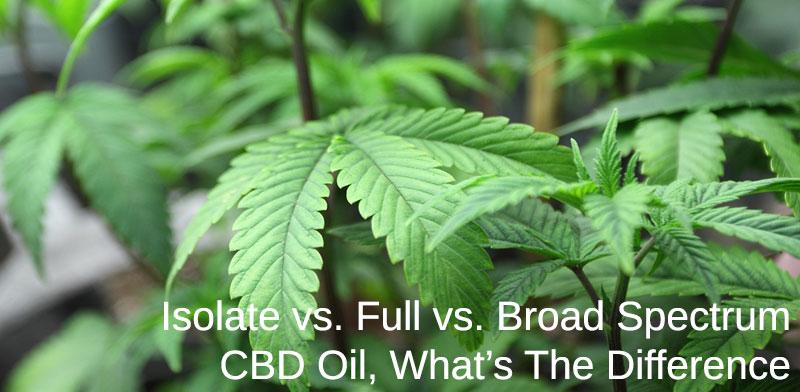 isolate, full, and broad spectrum cbd oil